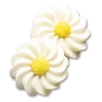 100 pcs Marguerites blanches