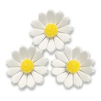 60  pcs Marguerites, blanches